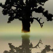 immagine di un baobab